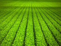 Next Gen Crops for Sustainable Agriculture